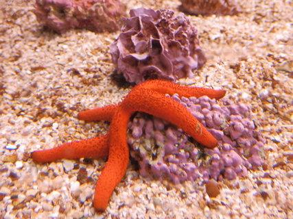 FOTKA - mořské akvárium v Pule / Chorvatsko