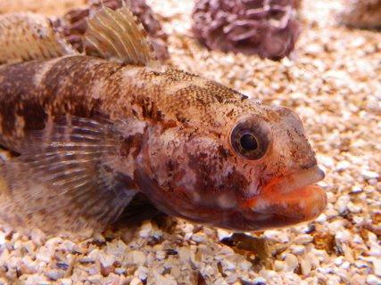 FOTKA - v mořském akváriu v Pule / Chorvatsko