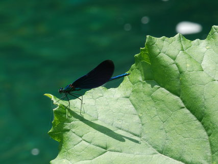 FOTKA - vážka a stín