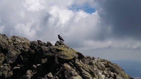 FOTKA - na skalách+
