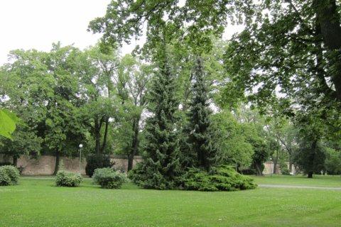 FOTKA - Letní den  v Královské zahradě - hlavním cílem bylo pěstovat zde stromy