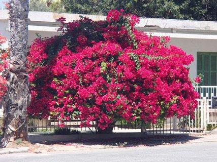 FOTKA - Cyprus - úžasná flóra