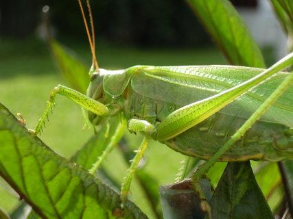 FOTKA - zelená krása