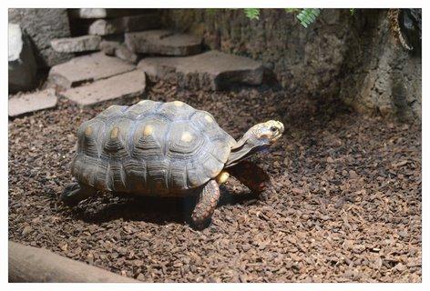 FOTKA - želva byla kupodivu hodně rychlá
