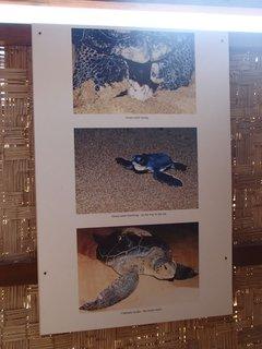 FOTKA - Cyprus - pláž Lara - info tabule o korytnačkách