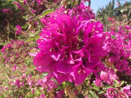 FOTKA - flóra na Cypre