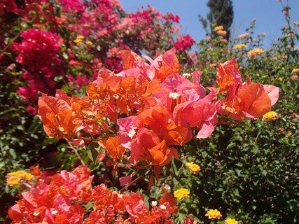 FOTKA - Sentido Cypria Bay - jednotlivé časti boli oddelené kvetinovými záhonmi