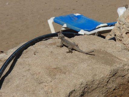 """FOTKA - Cyprus - malý """"návštevník"""" pri pláži"""