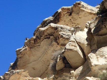 FOTKA - Cyprus -  poloostrov Akamas - tvorý ho prevažne skalistý terén, kde sa nachádzajú aj ovce, vidíš ju hore? :)