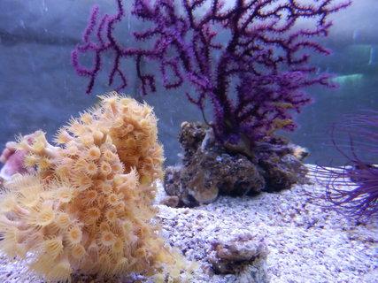 FOTKA - z mořského akvária
