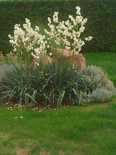 FOTKA - květinové zátiší s jukou
