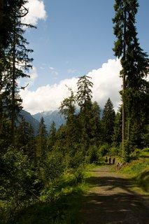 FOTKA - Výšlap na Kallbrunnalm - Cesta lesem