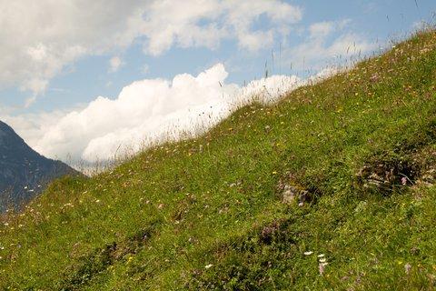 FOTKA - Výšlap na Kallbrunnalm - Louka