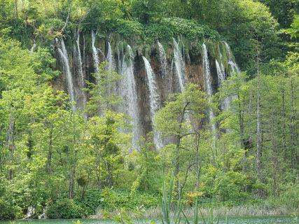 FOTKA - čůrající les