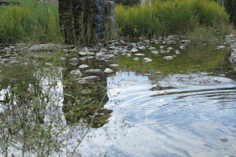 FOTKA - Parčík v Letňanech - vodní hladina