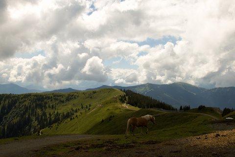 FOTKA - Asitz - Kůň na kopci