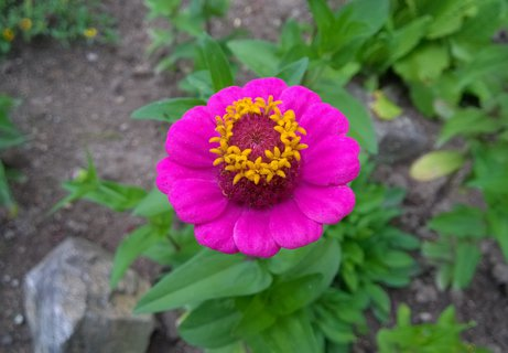 FOTKA - detail květu cínie