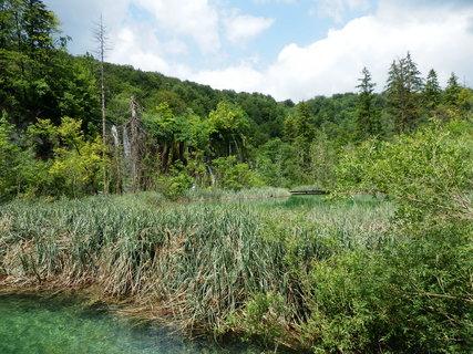 FOTKA - zeleň (Plitvice)