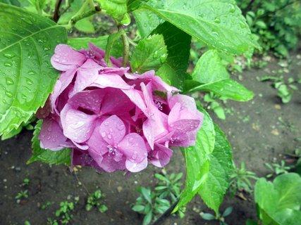 FOTKA - kvietok i listy mokré-pršalo