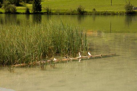 FOTKA - Výlet k Pillersee - Kmen v jezeře