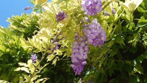 FOTKA - fialové květy