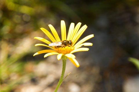 FOTKA - Výlet k Pillersee - Žlutá