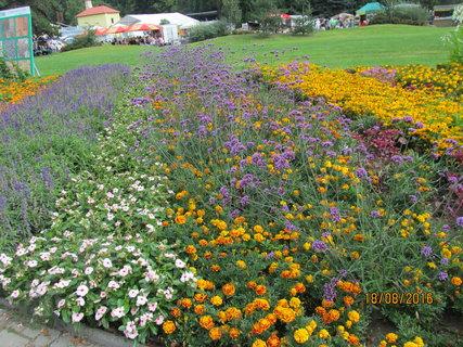 FOTKA - Venkovní osázení různými květinani