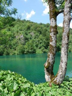FOTKA - pastva pro oči - odstíny zelené (Chorvatsko - Plitvická jezera)