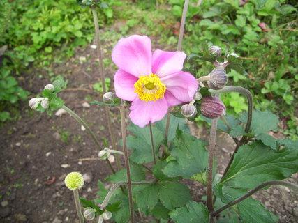 FOTKA - Má velké květy