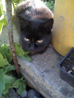 FOTKA - zahradní čičina