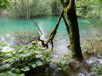 FOTKA - strom ve vodě