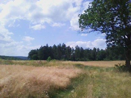 FOTKA - na kraji lesíka,,