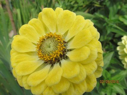 FOTKA - Krásně žlutá