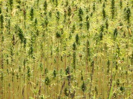 FOTKA - Detail rostlin na poli