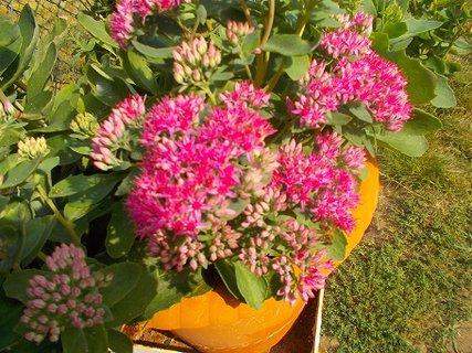 FOTKA - poslední květy