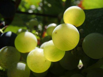 FOTKA - pár bobuliek na slnku