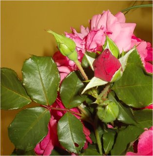 FOTKA - poslední růže doma letos ve váze