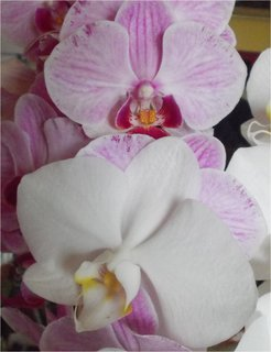 FOTKA - detail dvou květů