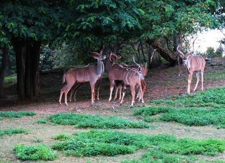 FOTKA - Návštěva Safari