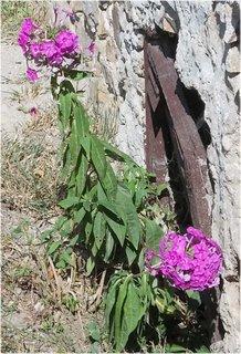 FOTKA - ještě sousedce kvetou