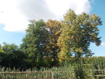FOTKA - už berou stromy podzimní barvu