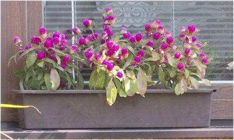 FOTKA - zajímavé kytky za oknem