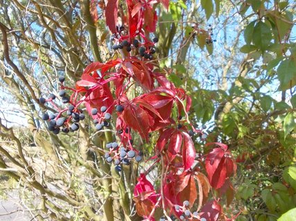 FOTKA - krásná barva podzimu vyniká