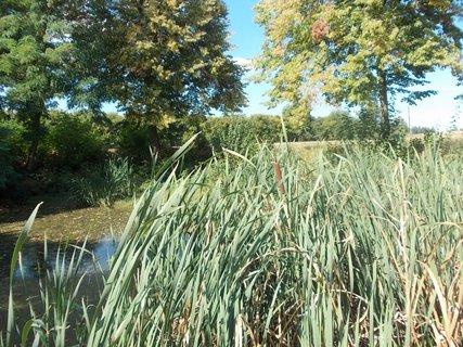 FOTKA - podzim u rybníka