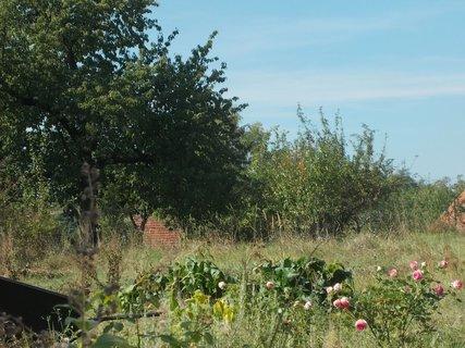 FOTKA - u soused� kvetou je�t� r�e