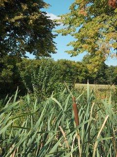 FOTKA - jen jeden doutník je na rybníku letos