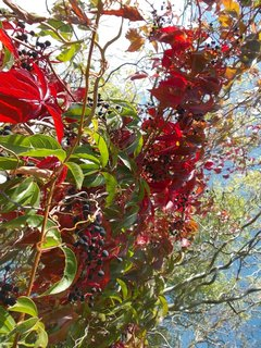 FOTKA - krása podzimní barvy