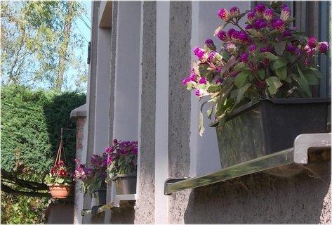 FOTKA - krásně vyzdobené parapety má sousedka