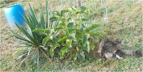 FOTKA - kocourek pod Magnolií