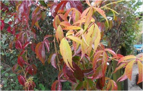 FOTKA - úžasný kolorit barev na podzim